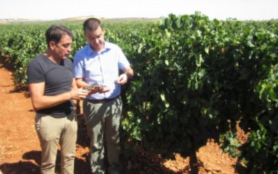 Martínez Arroyo affirms that the harvest in the DO Valdepeñas will be calm